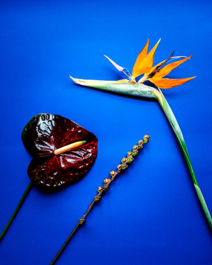 Skicka blommor idag med Flowery